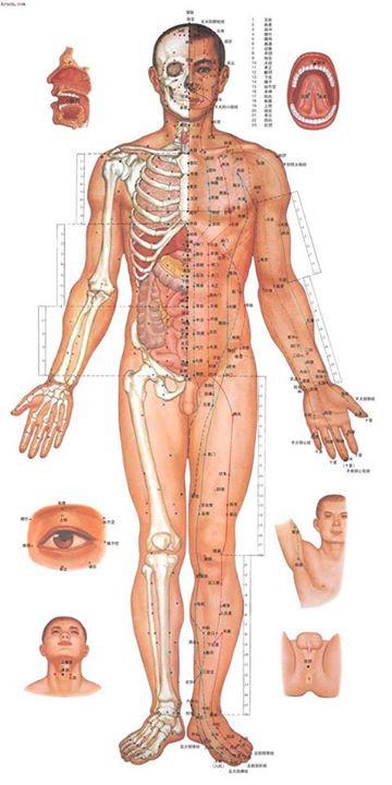 Hệ thống kinh mạch